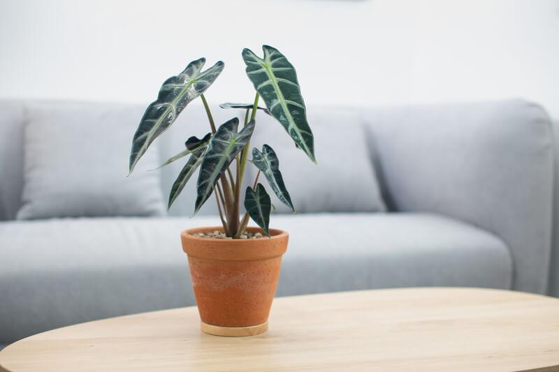 planten voor een jungle in huis